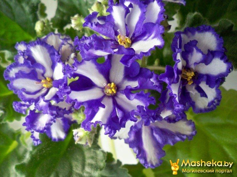 Цветы в могилёве